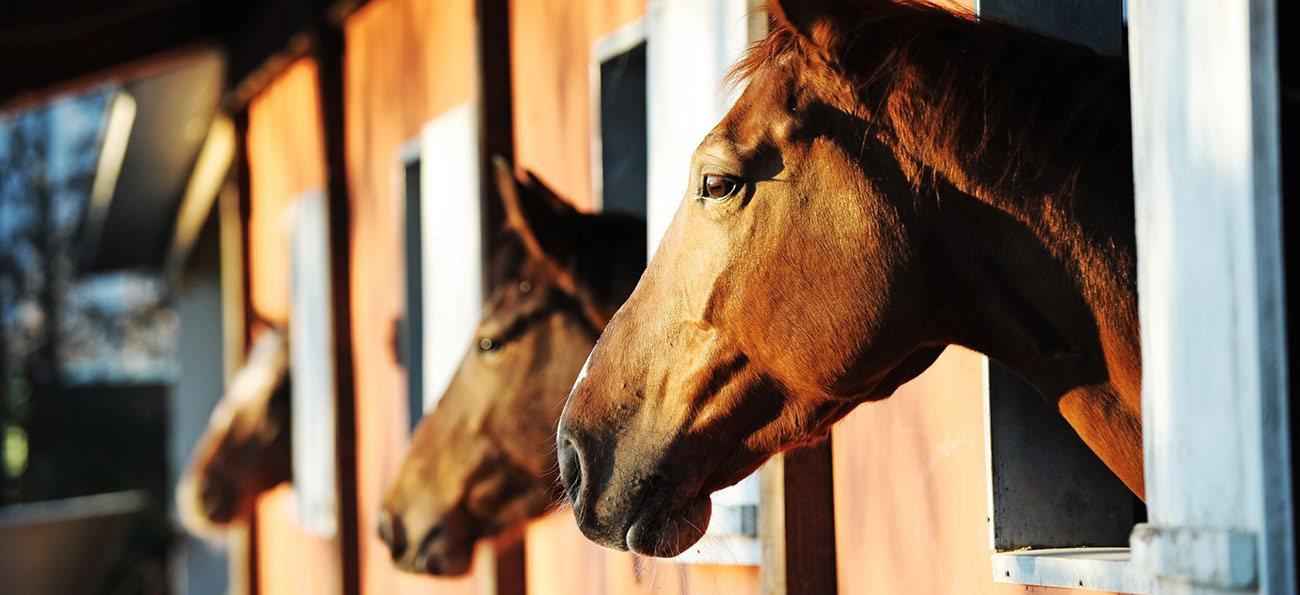 Andalusian horse properties