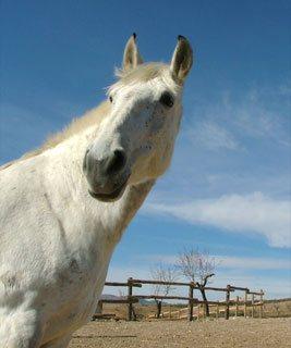 Horse properties in Almeria, Spain